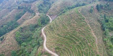 富硒茶叶|如何延伸茶产业的新亮点?