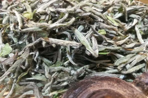 老富硒白茶是凉性还是热性